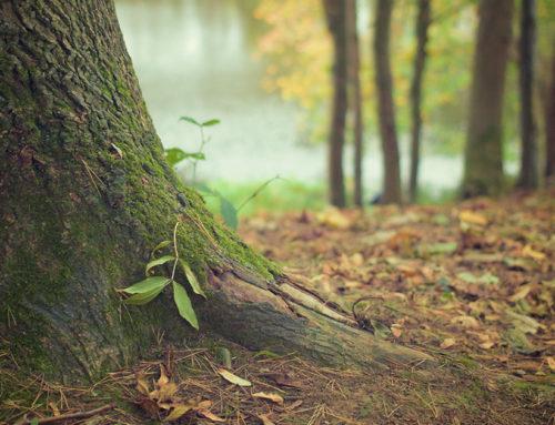 Les Groupements Forestiers, nouveaux moyens de transmission ?